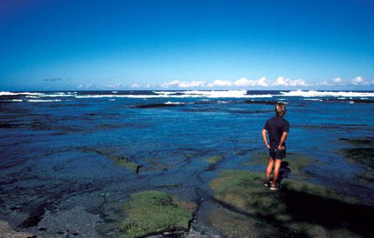 Puako Reef